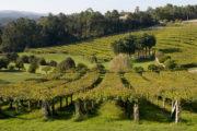 Pazo Baión viñedos