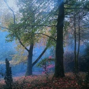 bosque pazo de la saleta