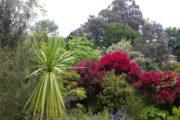 Pazo Saleta Jardín